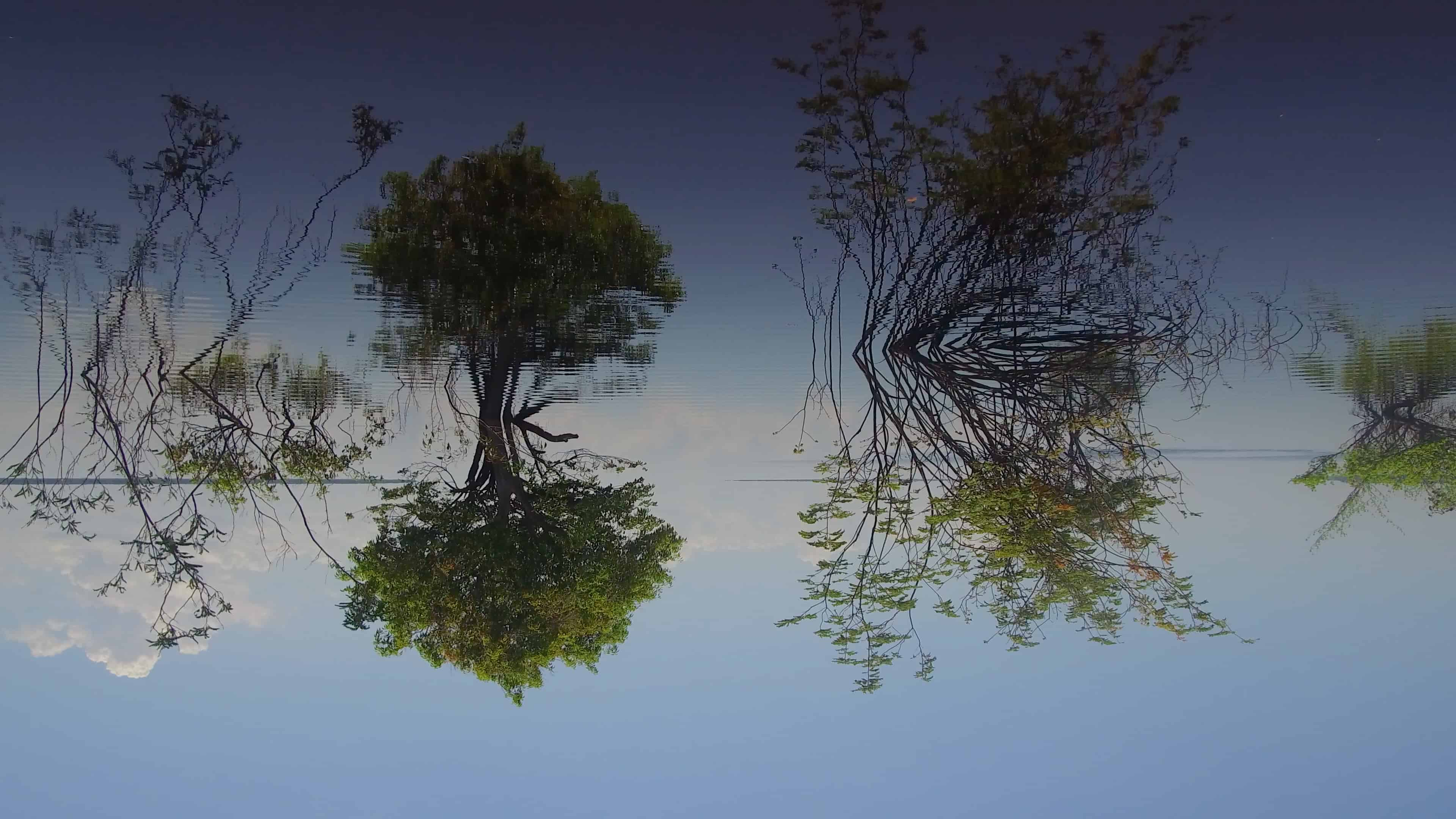 Alexandra_Lerman_Tree_Time_Still_9